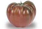 Tomaten noire de crime Prince de Bretagne_