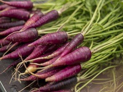 Mini wortel paars (12 bos)