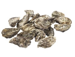 Oesters: Huitre fine claire nr. 4